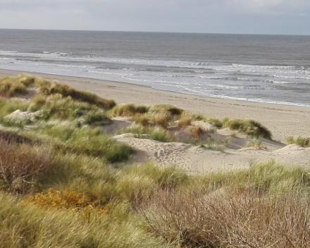 vakantiewoning 'Moerland - ligging dichtbij de zee